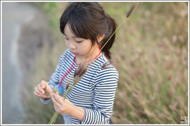 3月台南 親子寫真可以這樣拍 木棉花 蜀葵 小麥 一次讓你拍個夠 (29)