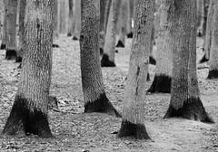 20180106-praha-0025 (xskyven) Tags: praha podzim prochazka tata prague walkaround trees nature blackandwhite monochrome