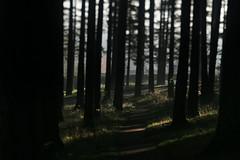 Mount Tabor (Tony Pulokas) Tags: mounttabor mttabor mounttaborpark portland oregon winter fog tree forest douglasfir tilt blur