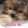 I don't see that changing, ever. (itsayorkielife) Tags: itsayorkielife yorkie yorkielove yorkiememe yorkshireterrier