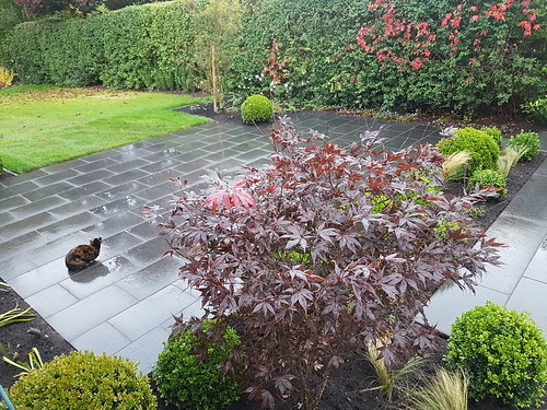 Garden Design and Landscaping Altrincham Image 22