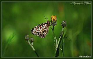 Farfalla in un un giorno di primavera - Aprile-2018