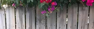Weathered Wood Fence