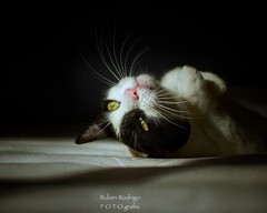 (Mister Blur) Tags: whiskers happy furry friday cat sun pink nose nikon d7100 35mm f18 snapseed rubén rodrigo fotografía littledoglaughedstories