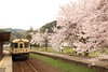 Local station (Teruhide Tomori) Tags: dmu tree flower sakura cherry train kyoto japon japan amino kyotango railroad railway kyototangorailway 京都丹後鉄道 丹後半島 夕日ヶ浦木津温泉 網野 京丹後 鉄道 日本 local 普通列車 spring platform station ktr