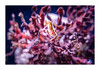 Seahorse (Dave Fieldhouse Photography) Tags: creatures seahorse nature underwater aqwa aquarium perth aquariumofwesternaustralia hilarysboatharbour fuji fujifilm fujixt2 highiso handheld marine fish coral hippocampus