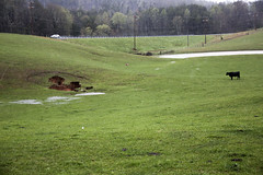 Sinkhole, Overton County, Tennessee 2 (Chuck Sutherland) Tags: sinkhole karst geology soil collapse subsidence depression easternhighlandrim sinkholeplain overtoncounty tennessee tn