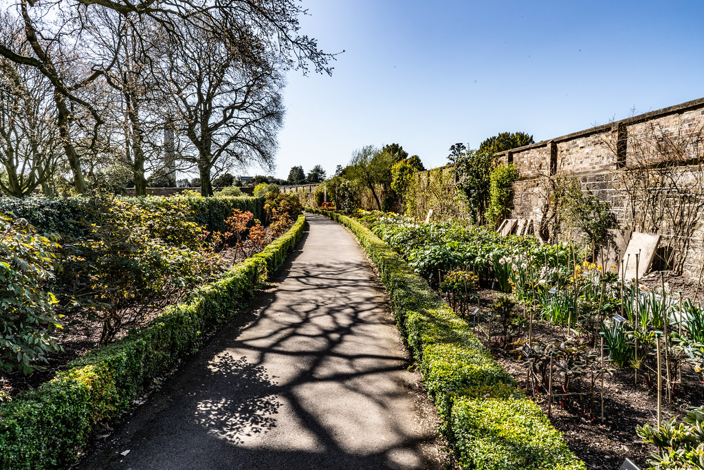 VISIT TO THE NATIONAL BOTANICAL GARDENS [GLASNEVIN DUBLIN]-138622