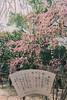 城南宮|京都 (KaguraYanki) Tags: 京都 canon650d 梅花 梅 梅花雨 枝垂梅 しだれ梅 椿まつり 源氏物語 花見 花之庭 photography kyoto japan