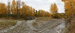 Jumping Pound creek in autumn (bichane) Tags: autumn fall colour jumpingpoundcreek trees water orange yellow gold creek alberta canada panorama