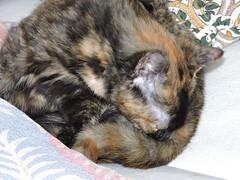 DSCN2737 (keepps) Tags: switzerland suisse schweiz spring vaud luins animal cat