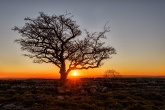 Goodnight Yorkshire (Pete Rowbottom, Wigan, UK) Tags: sunlight lonetree limestonepavement colourfulsunset landscape england light warmth goldenlight sillhouette gnarlytree northyorkshire peterowbottom nikond750 sunstar wideangle winskillstones skipton malham winter detail glow peaceful tranquil outdoor rocks horizon tree intothesun