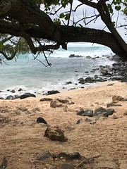 Rocky Shore (colonelchi) Tags: iphone 7 iphone7 iphone7plus apple phone smartphone trip vacation family wedding weekend tropical island familyvacation familywedding hawaii hawaiianisland hawaiianislands oahu northshore winter wintertrip islandgetaway getaway relaxation relax beach shore green tropicalisland islands unitedstates unitedstatesofamerica