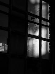 regard sur notre monde (objet introuvable) Tags: blackandwhite bw nb noiretblanc fenêtre window ombre shadow lumière light monochrome