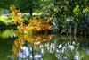 Cyprès chauve (Raymonde Contensous) Tags: cyprès chauve cyprèschauve marais reflets essonne domainedechamarande nature paysage