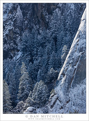 Cliff in Sun, Trees In Shadow (G Dan Mitchell) Tags: cliff sun trees shadow granite face edge morning snow covered sentinel rocks yosemite valley national park nature landscape winter sierra nevada california usa north america