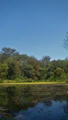 Conexion (Sereiazinha Si) Tags: lagoa lagoon águadoce água diamundialdaágua blue azul floresta forest atlanticrainforest conservation conservação sorocaba sãopaulo brasil brazil app áreadepreservaçãopermanente mata mataatlântica skye céu blueskye reflexo