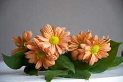 Still Life Cheerful Orange (The Good Brat) Tags: cheer cheerful cheery orange blooms flowers green stilllife simple grey gray white