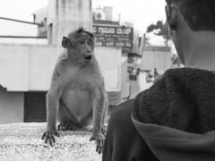 Funny Monkey (Niklas H. Braun) Tags: flickr monkey animal india mysore mangalore vacation asia wildlife funny face