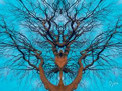 Symmetree (domwlive) Tags: trees spring countydurham light northeastengland castleeden symmetry sunset abstract branches reflections imagemanipulation evening photomanipulation surreal england unitedkingdom gb