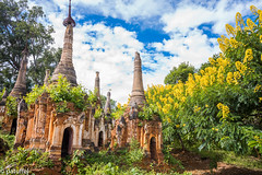 The Shwe Indein Pagodas with yellow flower (patuffel) Tags: inle lake myanmar burma shwe indein pagoda forest explore