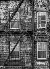 Vía de escape (Perurena) Tags: escaleras stairs escadas fachada ladrillos bricks edificio building salidadeemergencia ventanas windows cristales glasses blancoynegro blackandwhite bw nuevayork estadosunidos usa