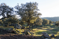 Sierra de Andujar - Andalusia - Spain (wietsej) Tags: sierra de andujar andalusia spain sony rx10 iv rx10m4 landscape nature rx10iv