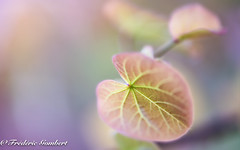 delicate (frederic.gombert) Tags: flower tree leaf leaves color colors light soft softness pink spring colorful bloom blossom