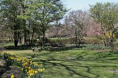 Sherwood Gardens (karma (Karen)) Tags: baltimore maryland sherwoodgardens parks gardens trees bushes flowers daffodils benches shadows hbm htmt cmwd