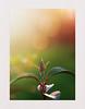 Quand les nouvelles feuilles attrapent le soleil ! (Marmad31) Tags: feuilles coloré bokeh coucher soleil contrejour