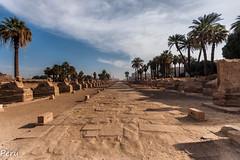 Avenida de las esfinges (Perurena) Tags: avenida calle street esfiges estatuas esculturas tierra camino path palmeras arboles trees cielo sky nubes clouds luxor egipto