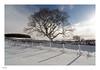 snow tree (www.alexharbige.co.uk) Tags: northumberland tree snow sunburst