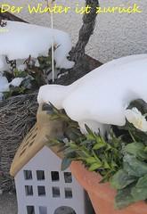Foto zum Pinnen ... (tannertext) Tags: winter garden winteringarden winterimgarten