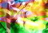 Inside the Woods (♣Cleide@.♣) Tags: © ♣cleide♣ brazil 2018 ps6 photo art digital painting texture filters artdigital exotic netartii atree sotn