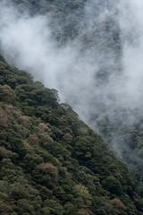 霧 (23fumi@fuyunofumi) Tags: ilce7rm3 sony fe85mmf18 sel85f18 mist fog haze forest valley tree a7r3 apsccrop 霧 谷 森 ソニー 宮崎 nature landscape 自然