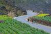 _Y2U1546.0218.Pải Lủng.Mèo Vạc.Hà Giang (hoanglongphoto) Tags: asia asian vietnam northvietnam northeastvietnam landscape scenery vietnamlandscape vietnamscenery vietnamscene hagianglandscape landscapewithpeople road people walk walkers flanksmountain mountain canon canoneos1dx canonef70200mmf28lisiiusm đôngbắc hàgiang mèovạc pảilủng phongcảnh phongcảnhhàgiang núi rockmountain núiđá conđường người đibộ phongcảnhcóngười ngườiđibộtrênđường hoacải spring mùaxuân hàgiangmùaxuân