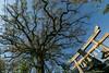 801A1124 (鹽味九K) Tags: kyōtoshi kyōtofu 日本 jp 新熊野神社 temple 廟 鳥居 樹 tree kansai 京都