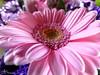 Fleur (Lyzoo) Tags: fleur rose bouquet nature