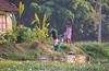 I think she wants to be photographed! By the Kerala Backwaters. (amanda & allan) Tags: india alleppey kerala riceboat riceboats palmtrees palms backwaters veniceoftheeast
