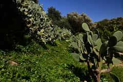 The Kolimbethra Garden, Valle dei Templi, Agrigento, Sicily, April 2018 166 (tango-) Tags: sicilia sizilien sicilie italia italien italie