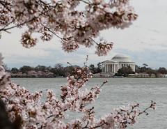 Focus on the Jefferson Memorial