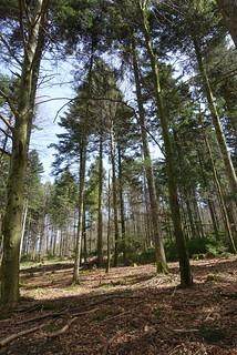 spring forest (2)