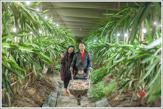 火龍果園星光野餐Ⅱ 找地瓜 烤地瓜 吃地瓜 (40)