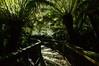 Great Otway National Park (moniq84) Tags: great national park australia world nature lights shadows dark naturephotography sun green south victoria ocean road reserve tree trees nikon travel travelphotography otway port campbell