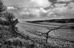 Nikon F801S Sigma f2.8 28-105 FOMA 200 XTOL (Leinik) Tags: nikon f801s sigma f28 28105 foma 200 xtol paysage landscape bw noir blanc black white blanco negro