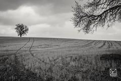 Camino a las raíces (amofer83) Tags: 2018 amigos estacada marzo tarancón viaje árbol campo country