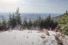 Summit dogs on McDonald Mountain (johnwporter) Tags: hiking snowshoe cascades mountains nationalforest mtbakersnoqualmienationalforest mcdonaldmountain 徒步 雪鞋行 喀斯喀特山脈 山 國家森林 貝克山史諾夸米國家森林 麥當勞山 labrador yellowlab 拉布拉多 黃拉不拉多