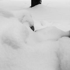 Snow pussy #pilesofsnow #snow #lawnornament #blackandwhitephoto #goth #Gothic #gothart #gothicart #photography #photo #photoediting #vintage #eerie #oldphoto #art #beautiful #creative #creativity #daringgreatly (muchlove2016) Tags: pilesofsnow snow lawnornament blackandwhitephoto goth gothic gothart gothicart photography photo photoediting vintage eerie oldphoto art beautiful creative creativity daringgreatly