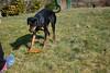 20180325 Garten_ (4).jpg (Marco Förster) Tags: hunde dobermann sina tiere natur