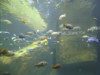 fish through the glass